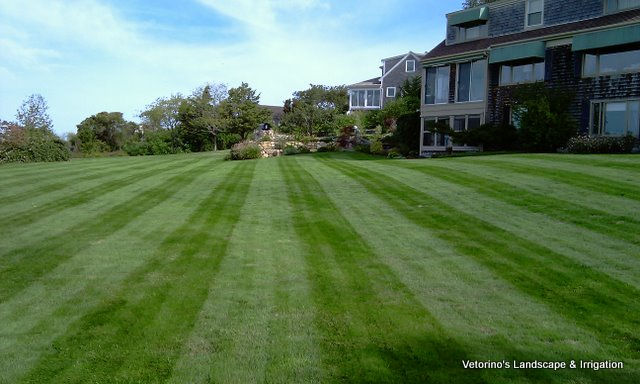 Well cared for lawn