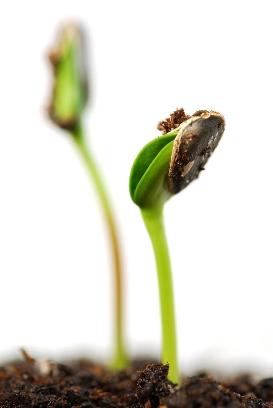 Starting Your Garden Seeds Indoors VETORINOS LANDSCAPING