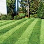 Pattern in lawn